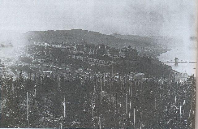 Gellért hegyi szőlők 1890 k