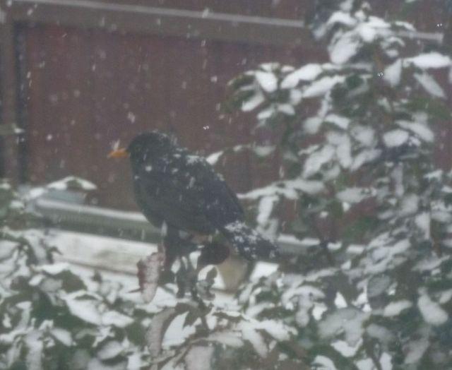 hóesés 2012.02.15. P1110544