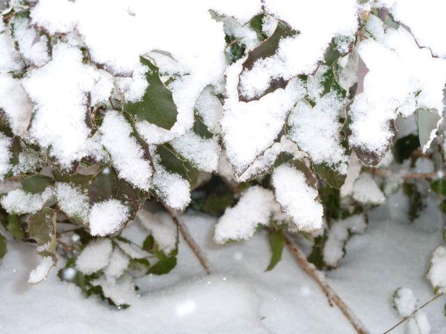 hóesés 2012.02.15. P1110551