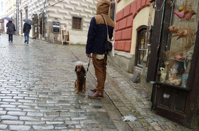 Český Krumlov 2013 húsvét P1270681 kutya élet 1
