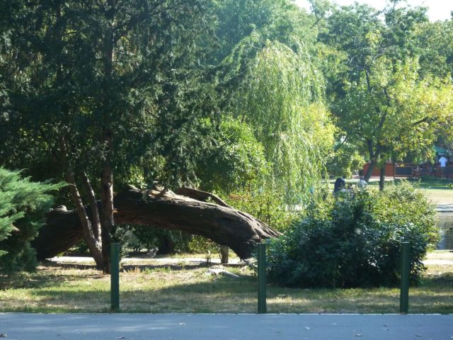Városliget 2011.09.26.Állatkerti út 014