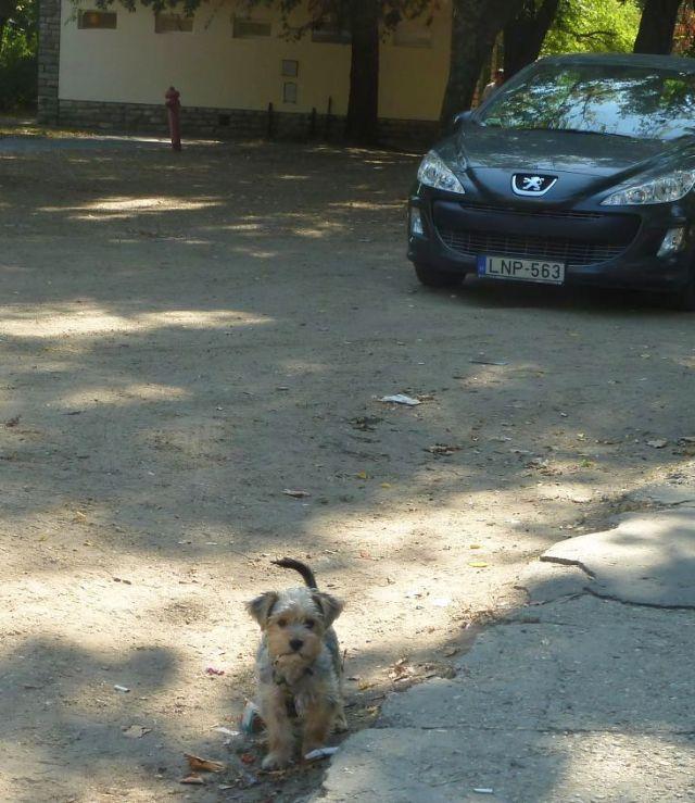 Városliget 2011.09.26.Állatkerti út 046