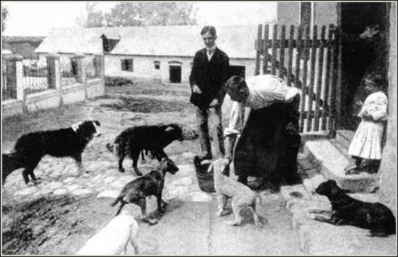 Etetik Szontagh kutyáit 1905