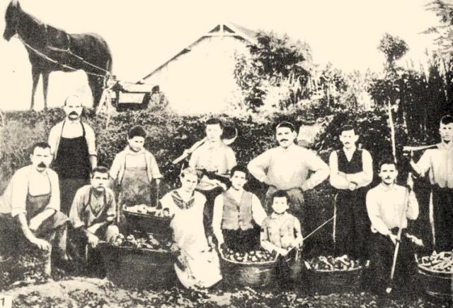 bolgár kertészek 1-318a