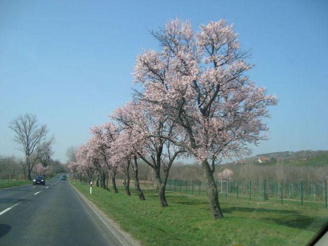 Tavaszodik, Keszthely DSC04968