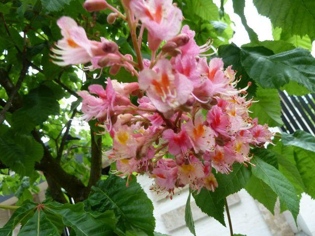 Tavasz 2015. május 1. P153219 a
