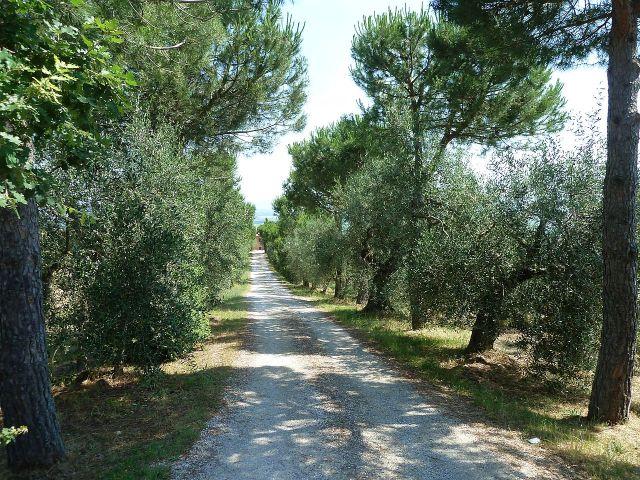 2014 nyár P1470188 Toscana
