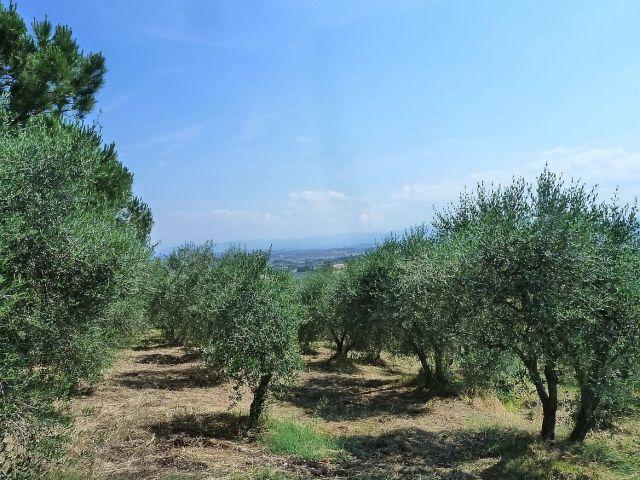 2014 nyár P1470187 Toscana