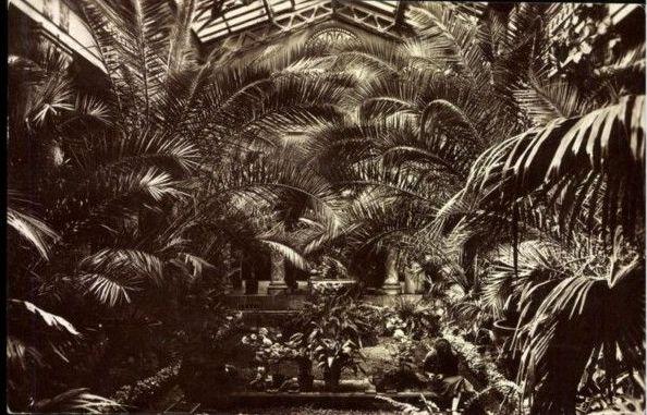 1933 Gellért fürdő pálmaketje