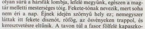 Issa_völgye-_fekete_disznó