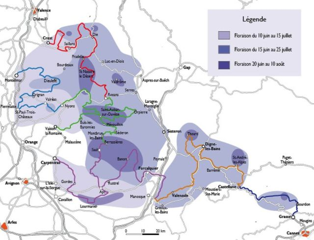 levendula virágzási térkép 2013-02