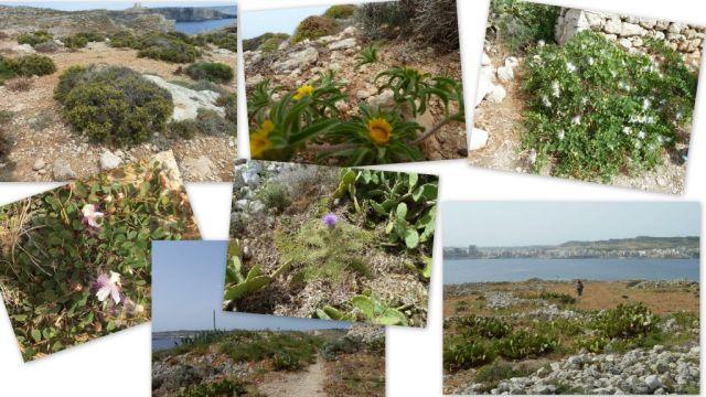 Szent Pál szigeti növényzet1