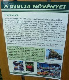 Arborétum, Vácrátót P1720269 Gyümölcsök, Biblia növényei tábla