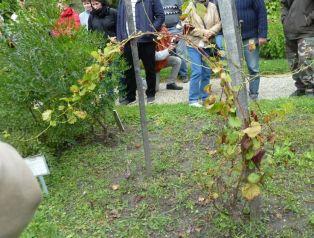 Arborétum, Vácrátót P1720301