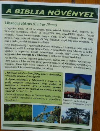 Arborétum, Vácrátót P1720384 Cédrus,Biblia növényei tábla