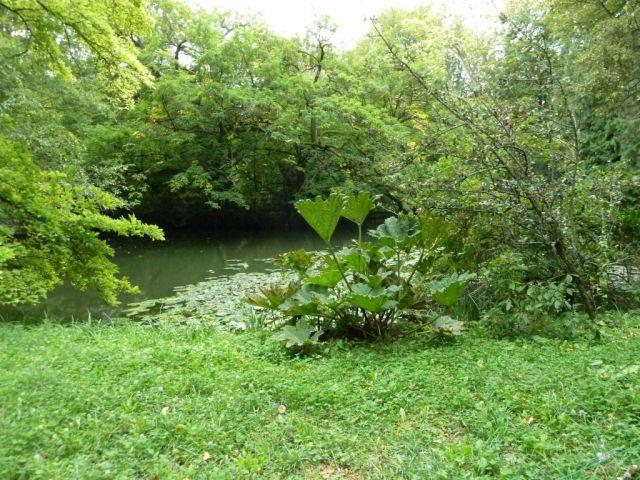 Arborétum, Vácrátót P1720395
