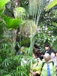 Arborétum, Vácrátót P1720437 Papirusz