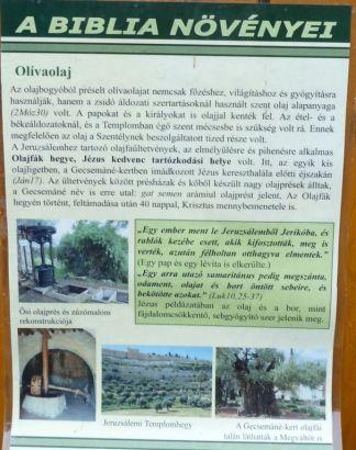 Arborétum, Vácrátót P1720459 Biblia növényei tábla