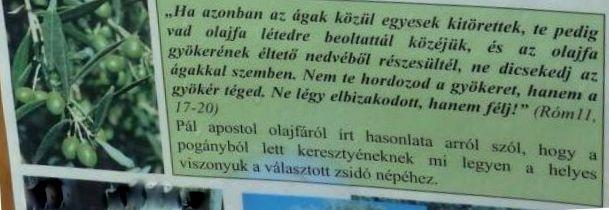 Arborétum, Vácrátót P1720460 olajfa példázat