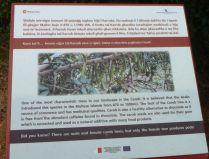 Gozo P1690267 szentjánoskenyérfa