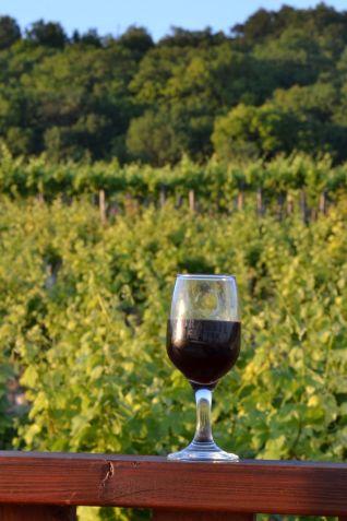 Szőlő és bor DSC_0634 - V