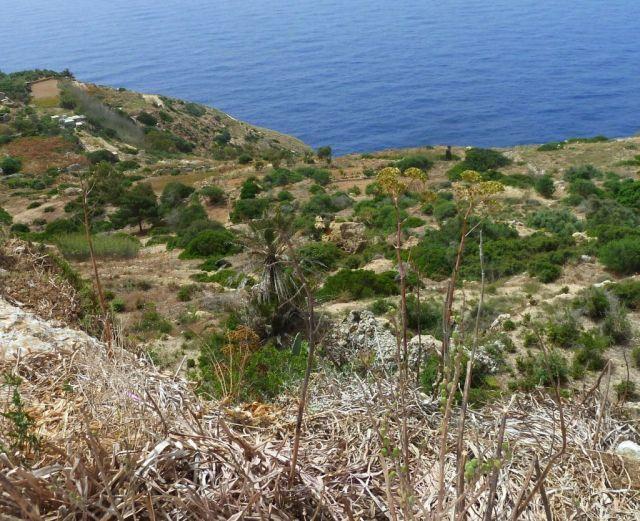 Málta P1670908 Dingli sziklák