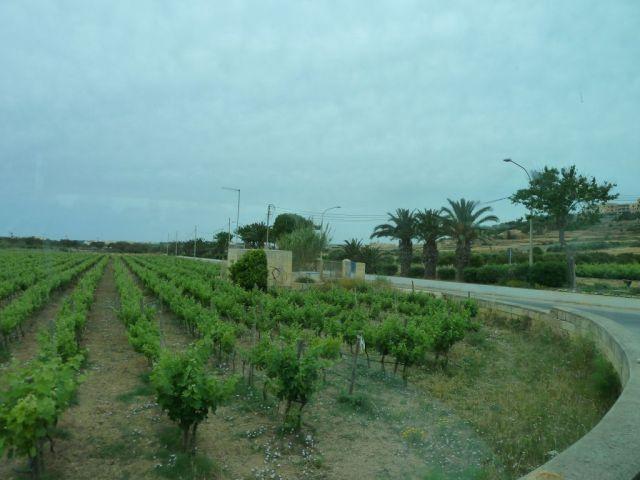 Gozo P1690227