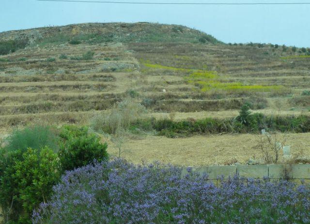 Gozo P1690358
