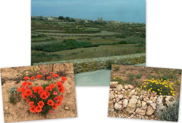 Zöld Gozo