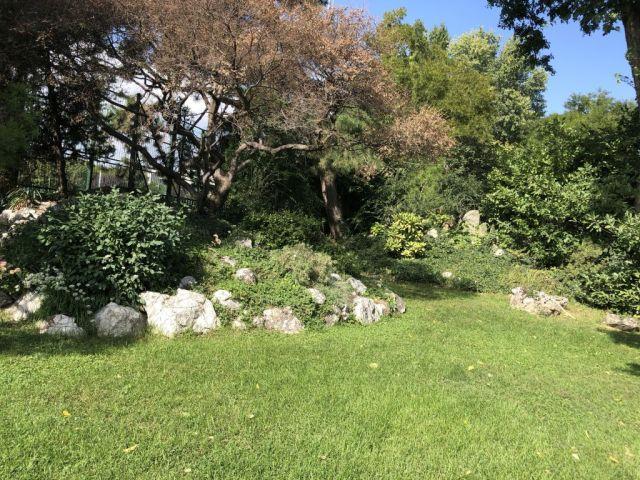 Zugló - japánkert IMG_4613