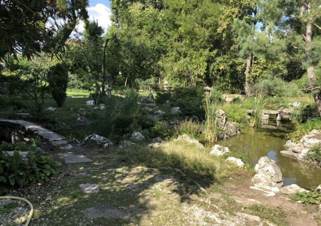 Zugló - japánkert IMG_4629