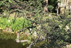 Zugló - japánkert IMG_4670 amadárbirs