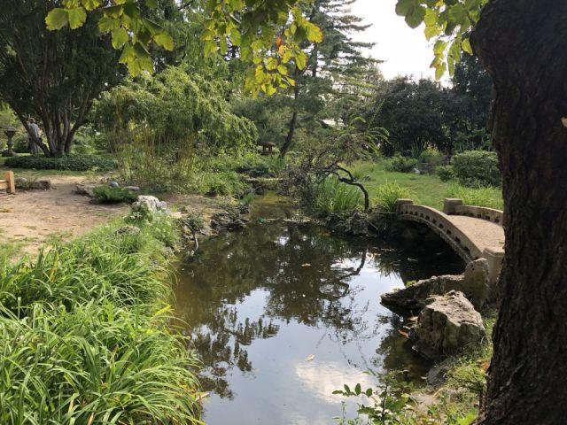 Zugló - japánkert IMG_4677