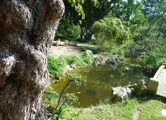 Zugló - japánkert P1760525
