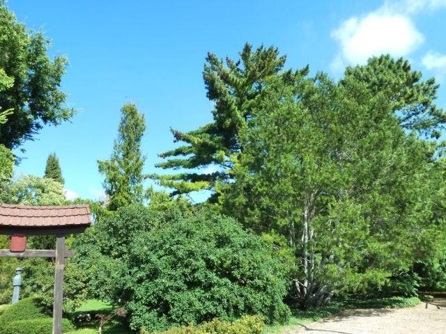 Zugló - japánkert P1760582 legmagasabbak