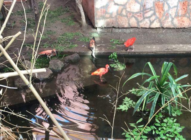 IMG_3652 Nyíregyháza, Zoo