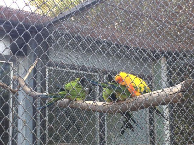 IMG_3657 Nyíregyháza, Zoo