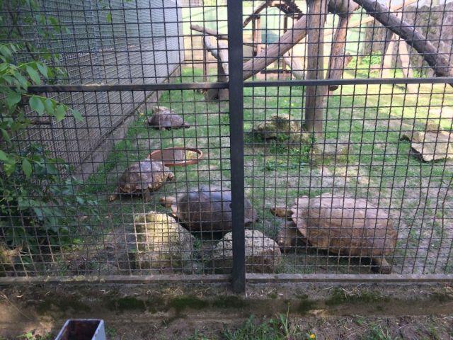 IMG_3670 Nyíregyháza, Zoo