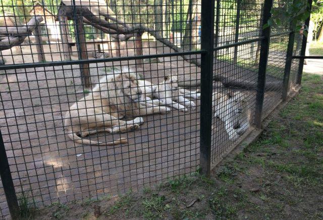 IMG_3673 Nyíregyháza, Zoo