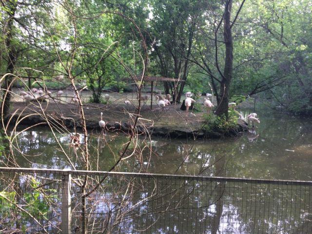 IMG_3688 Nyíregyháza, Zoo