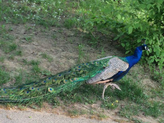 IMG_3709 Nyíregyháza, Zoo