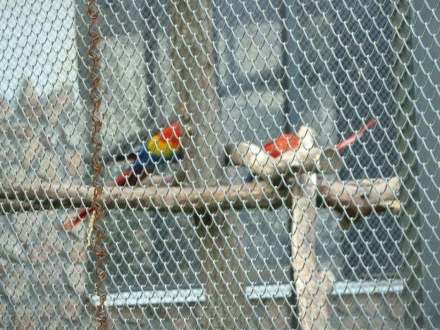 P1740893 Nyíregyháza, Zoo