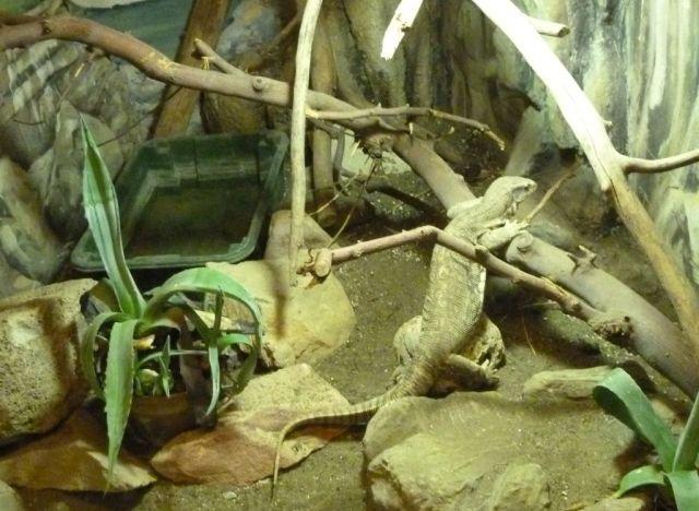 P1740904 Nyíregyháza, Zoo