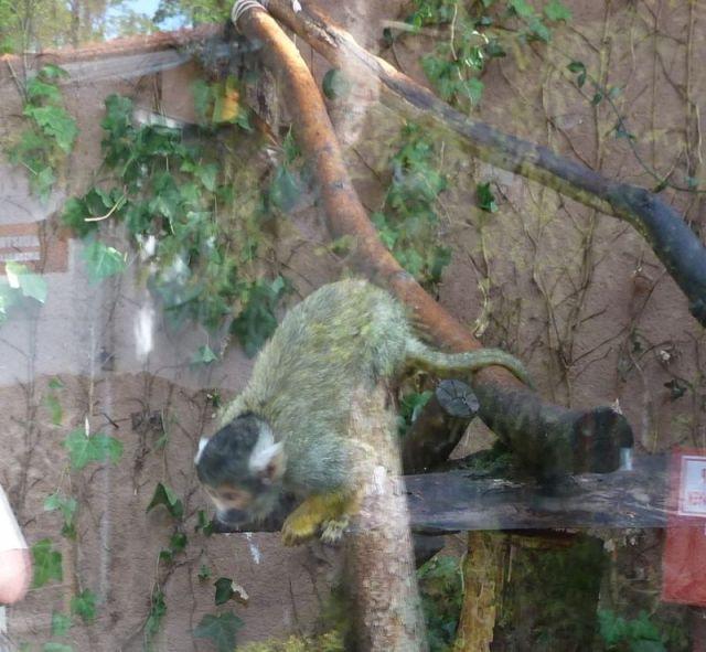 P1740937 Nyíregyháza, Zoo