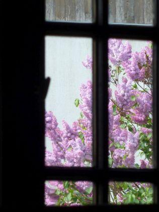 P1740993 Tákos templom ablak