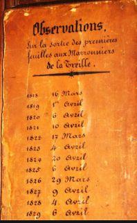 A_hivatalos_genfi_gesztenyefa, Wikimedia Commons