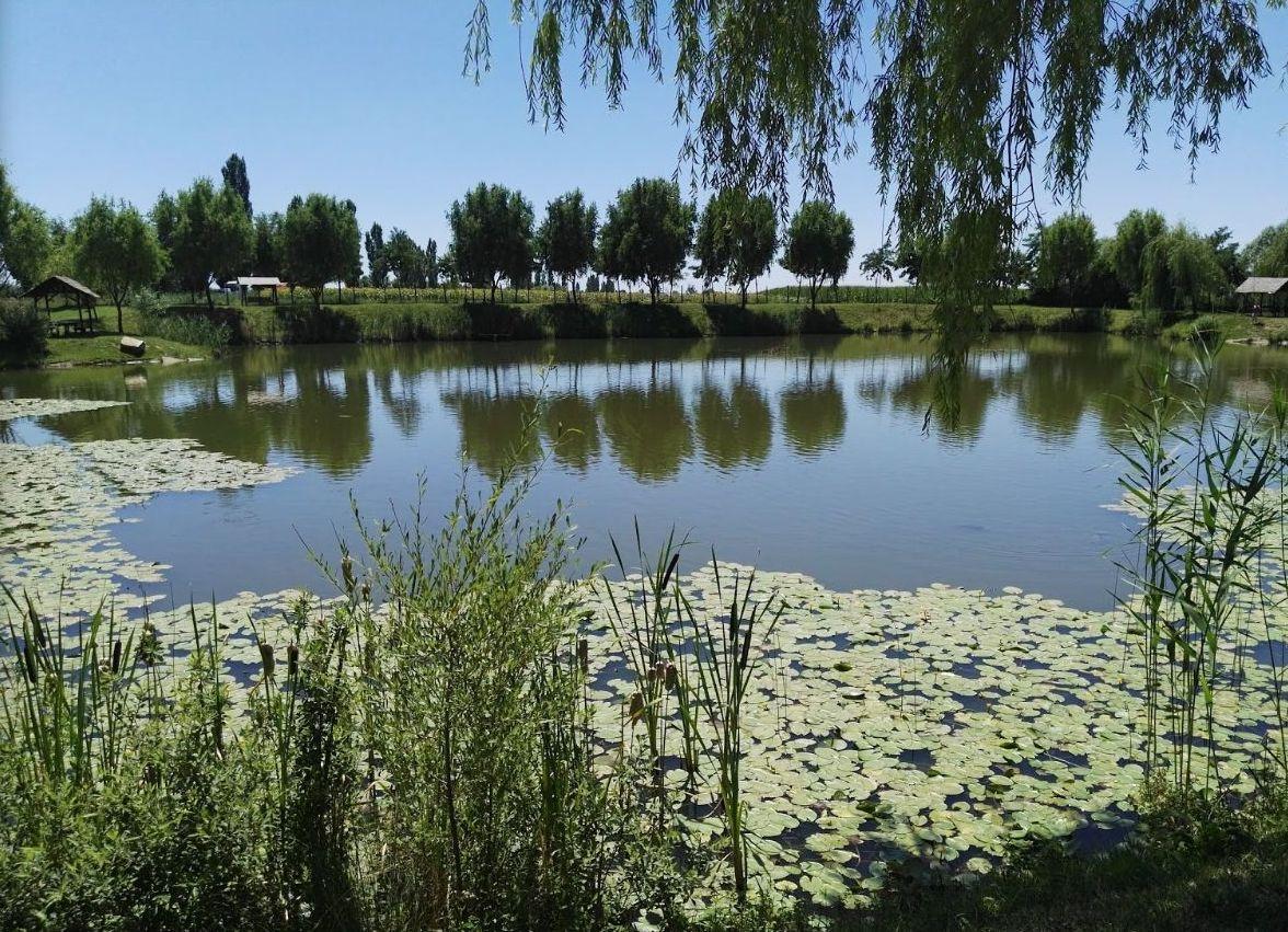 Homorog tó 21 Nagyszalonta mellett